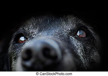 tier, -, alter hund