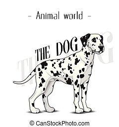 tier, bild, vektor, welt, hintergrund, hund, dalmatiner