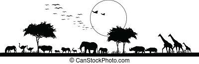 tier, silhouette, safari, schoenheit