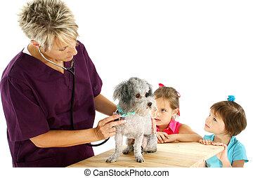 tierarzt, hund, kinder
