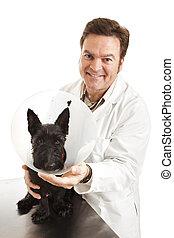 tierarzt, mit, hund, in, schützender kragen