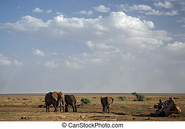tiere, 021, elefant