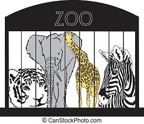 tiere, an, der, zoo