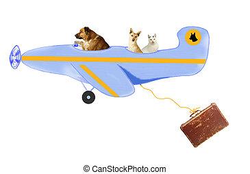tiere, hunden, und, katz, luft, reise