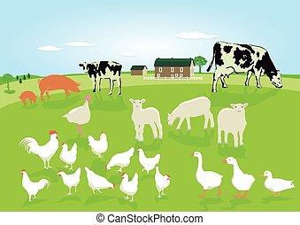 tiere, in, der, landwirtschaft.eps