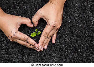 tierra, árbol joven, tenencia, superficie, manos