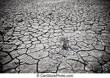 tierra, agrietado, desierto