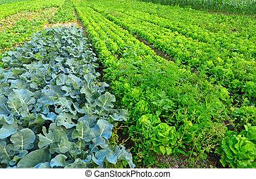 tierra, cultivado