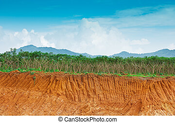 tierra, farm., humano, debajo, mandioca, erosión, condición, acantilado