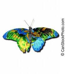 tierra, mariposa