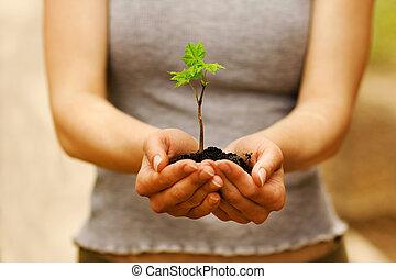 tierra, planta, Manos