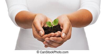 tierra, planta, valor en cartera de mujer, manos