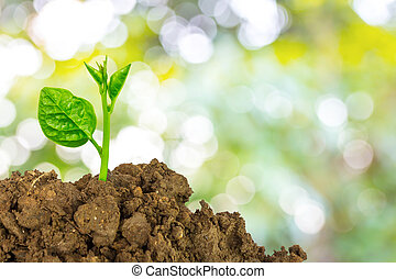 tierra, planta, verde, joven