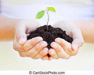 tierra, poco, planta, tenencia, Manos