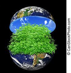 tierra, verde