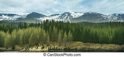 tierras altas, montañas, y, bosques