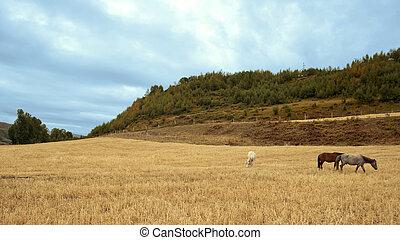 tierras altas, rancho