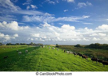 tierras labrantío, paisaje, holandés