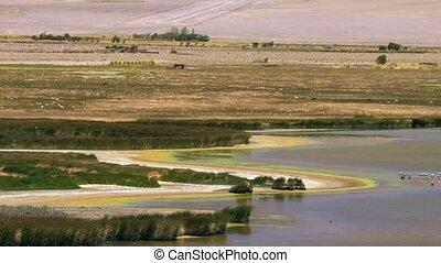 tierwelt, an, der, laguna, de, antofagasta, argentinien