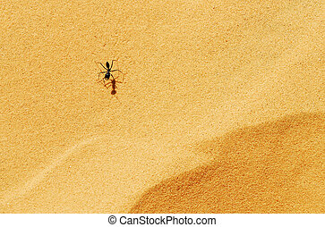 tierwelt, fotos, -, ameisen