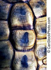 tierwelt, fotos, -, turtle