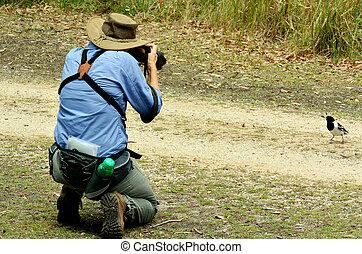 tierwelt, frau, fotografieren, fällig