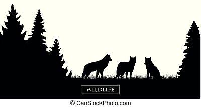 tierwelt, silhouette, wiese, wolfs, schwarzwald, weißes, satz