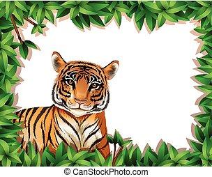 tiger, フレーム, 自然