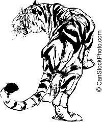 tiger, 図画