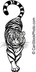 tiger, 白, 黒, かがむ