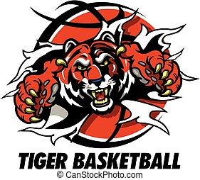 tiger basketball - tiger mascot ripping through basketball...