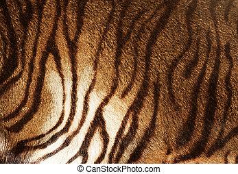 tiger, beschaffenheit