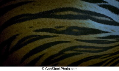 Tiger Breathing In The Evening Detail - Closeup of tiger...