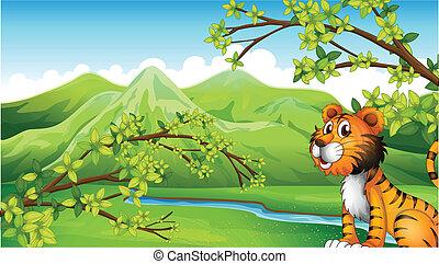 tiger, cenário montanha