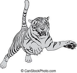 tiger - grey tiger isolated on the white background