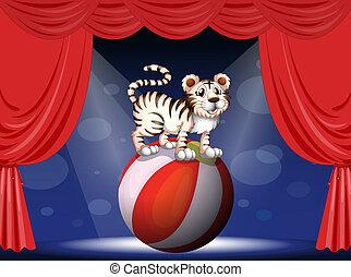 tiger, compiendo, circo