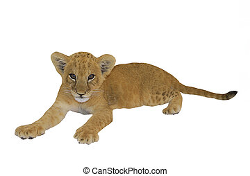 tiger cub on a white background