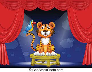 tiger, cyrk, papuga