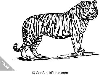 tiger, disegnare, incidere, illustrazione, inchiostro