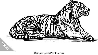 tiger, disegnare, inciso, illustrazione, inchiostro