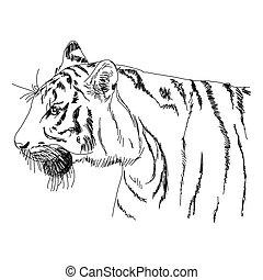 tiger, disegnato, -, mano