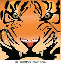 tiger face color vector illustration