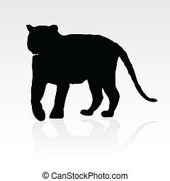 tiger, fekete, árnykép, fiatal