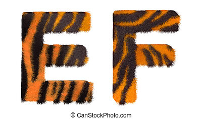 Tiger fell E and F letters isolated over white background