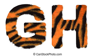 Tiger fell G and H letters isolated over white background