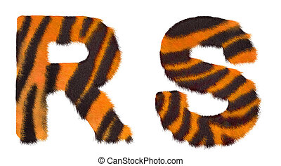Tiger fell R and S letters isolated over white background