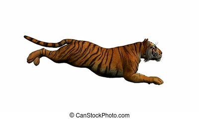 tiger, futás