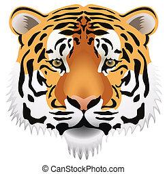 tiger head - vector tiger head