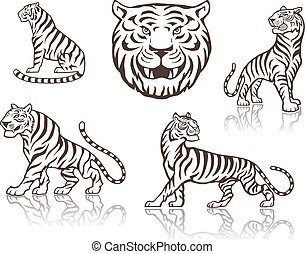 Tigers head and tigers sitting and walking illustration