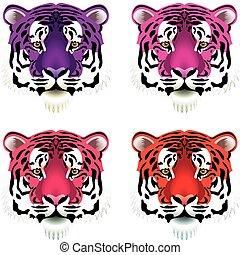 tiger, huvuden